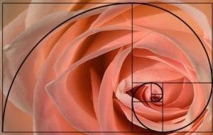 Dashboard Layout Design Using Rose Fibonacci