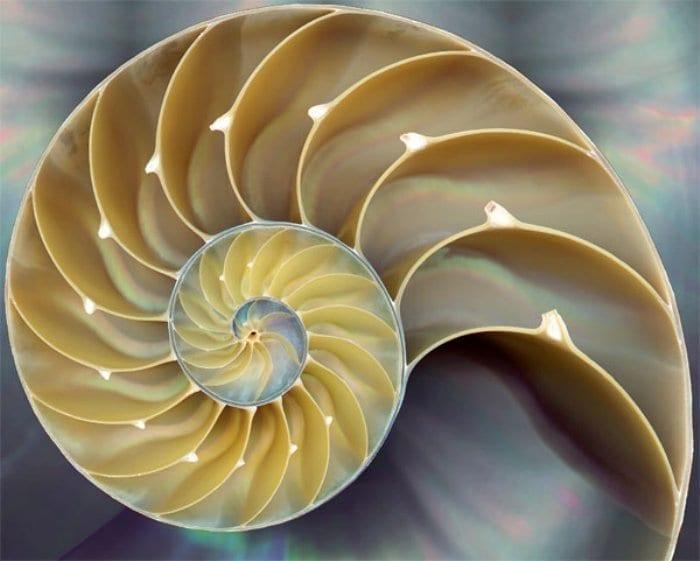 Nautilus Shell Fibonacci